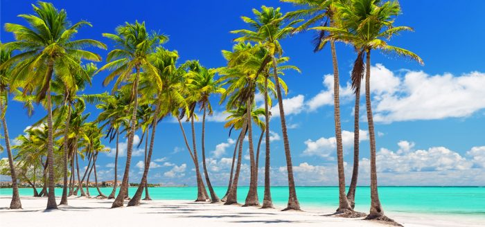 Coconut-Palm-trees-on-white-sandy-beach-in-Punta-Cana,-Dominican-Republic